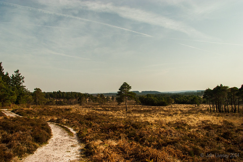 View towards Morden Bog