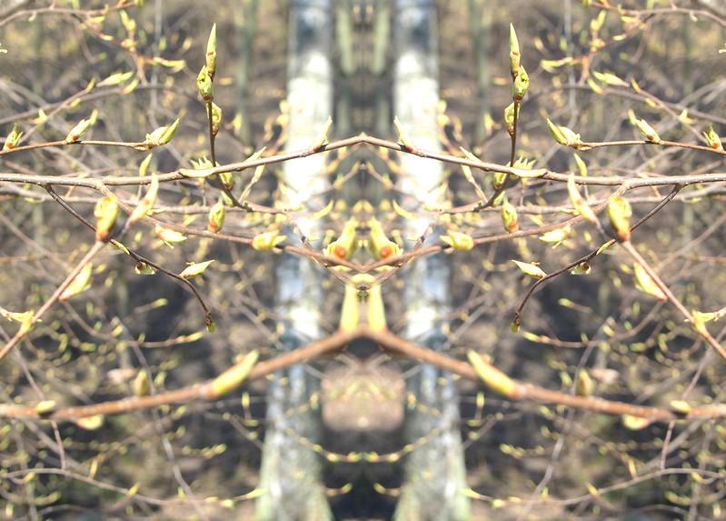 BeFunky_PicMonkey Collagebjh.jpg