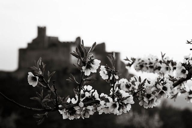 Castillo y árbol en flor