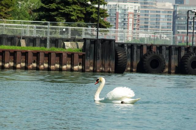 goose-water