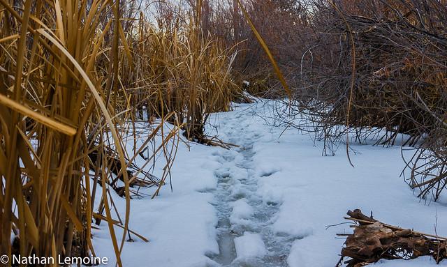 Tracks in the Snow, Canon EOS REBEL T3I, Tamron SP 35mm f/1.8 Di VC USD