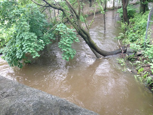 Brook at Near Flood Stage