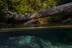 Creek over and under, Opal Creek Ancient Forest Center