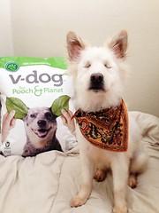Dasol loves V-dog!