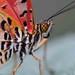 Butterflies 2013 - 3 by Bengio1970