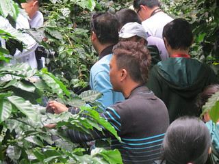 organic-coffee-farm-sagada.jpg