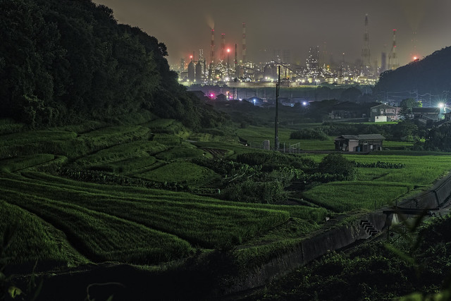 Рисовые плантации на фоне завода