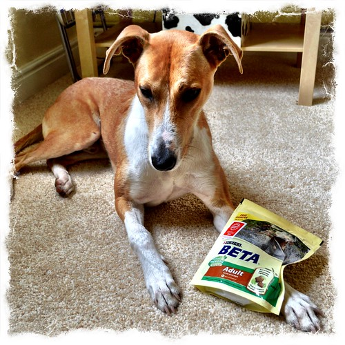 Barley the Lurcher and Purina dog food