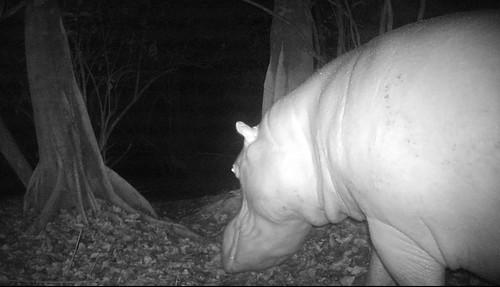 hippo parc perroquet_camera trap