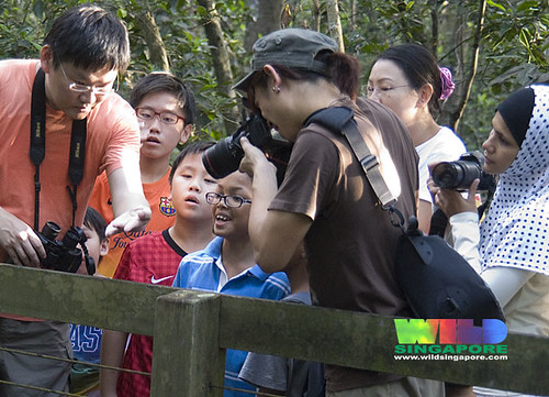 Visitors on a free guided tour of Pasir Ris mangroves by the Naked Hermit Crabs