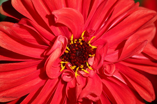 Red Flower, Botanic Garden - Oxford