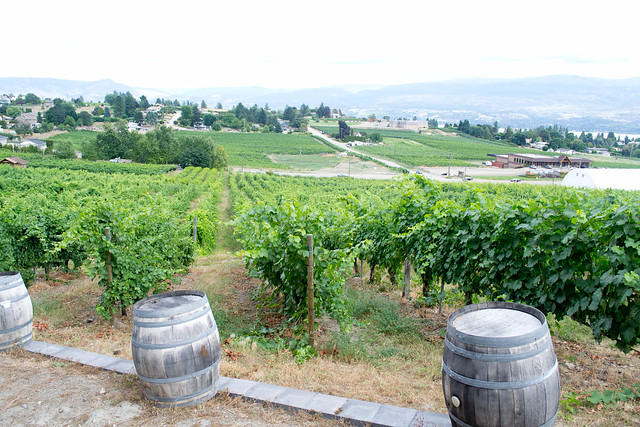 Little Straw Vineyards | Okanagan, Canada