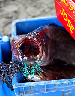 Horror fish at Puerto Lopez fish market, Ecuador