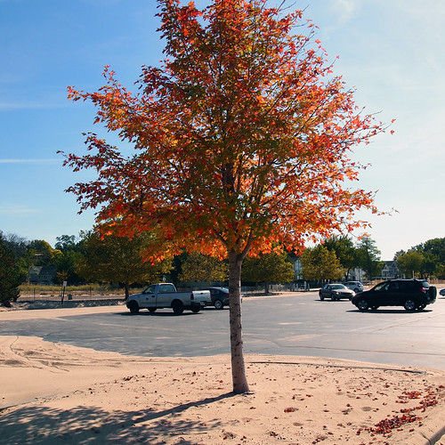 beach fall tree