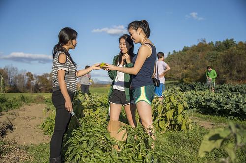 autumn fall students dartmouth organicfarm