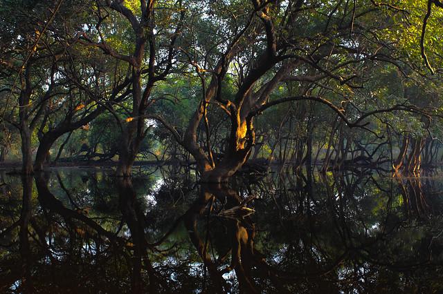 mystic jungles