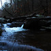 Shenandoah Trout Stream