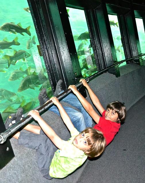 underwater observatory at homosassa