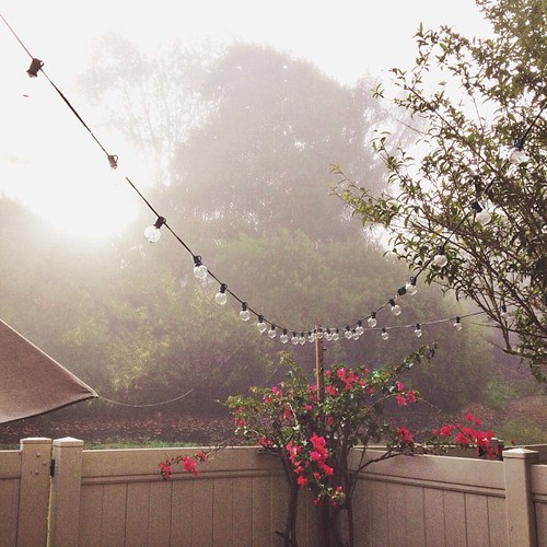 Sun is trying hard to peek thru the thick fog. #californiawinter