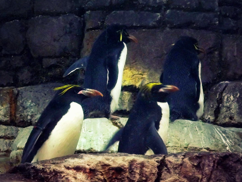 Penguins Detroit Zoo
