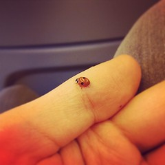 And suddenly there's a ladybug