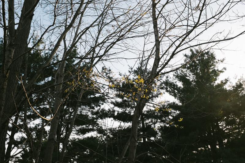 Backyard-16