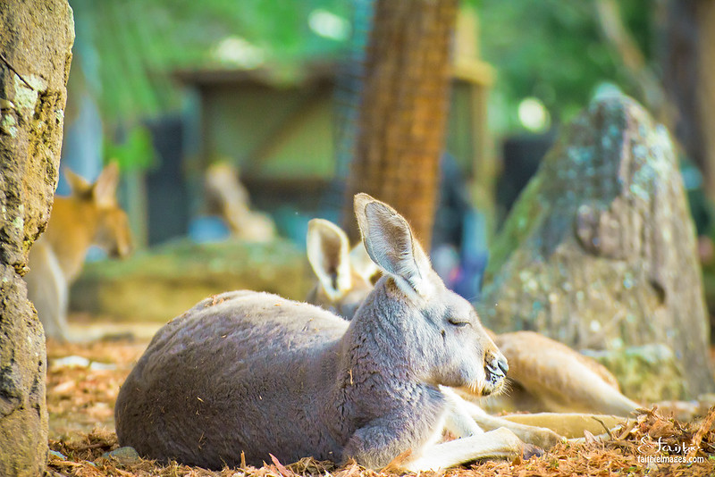 Relaxing marsupial lifestyle