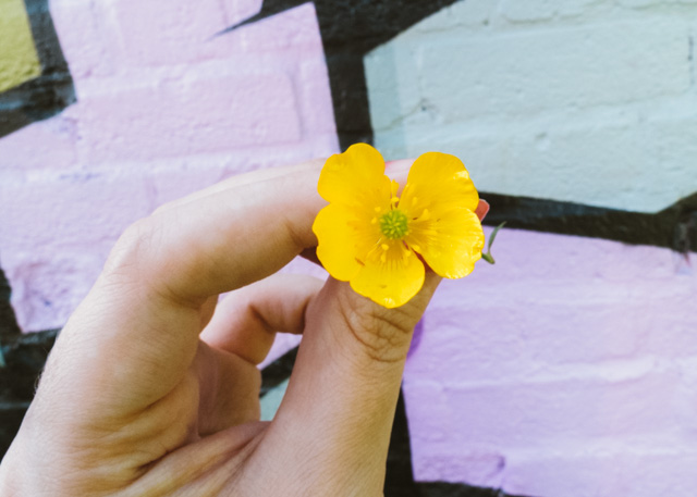 hand holding buttercup in front of graffiti