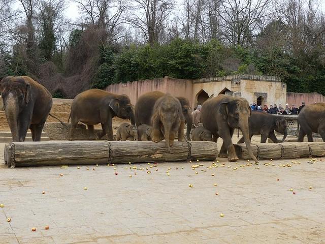 Elefanten, Zoo Hannover