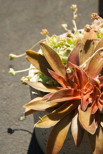 succulent planter  3383