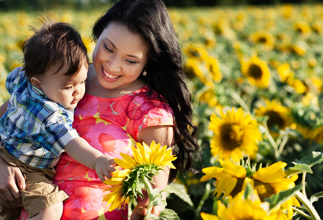 dallas sunflower fields loft aqua spritz
