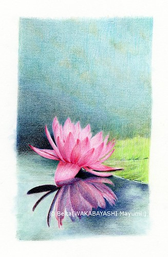 2013_04_25_waterlily_09_s by blue_belta