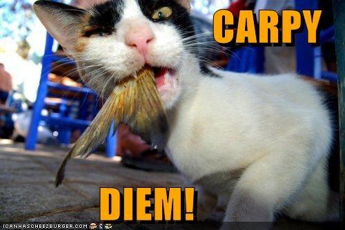 Carpy Diem