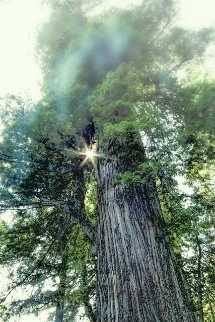 Debi's Tree