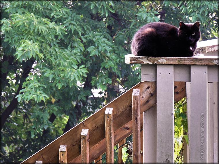 DSCN3604_black_cat
