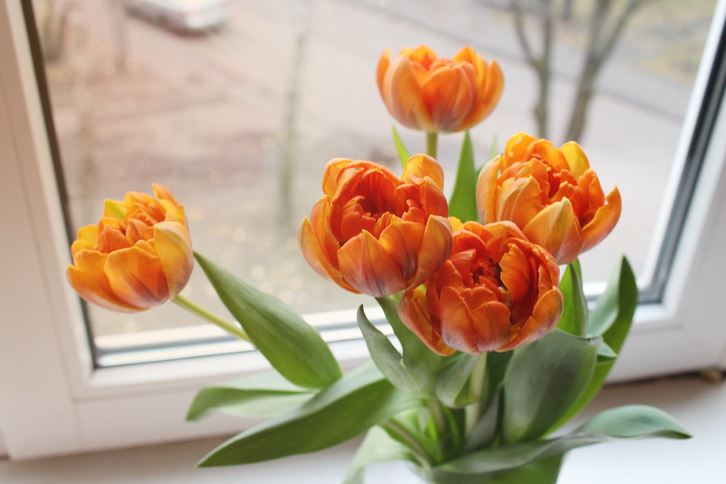 boyfriend gifted me flowers for no reason, beautiful orange tulips