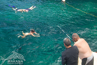 Snorkeling on the Napali Coast, Kauai