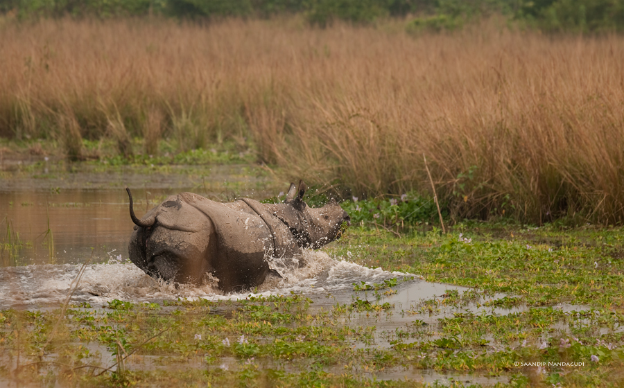 Rhino-col5