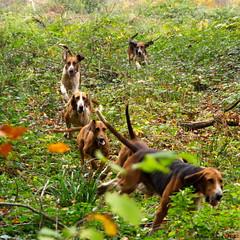 Les six chiens