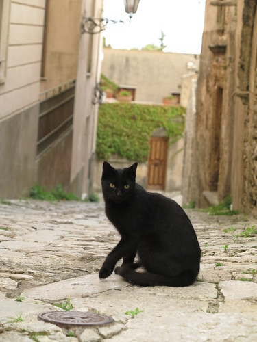 Erice古城裡的盯著我瞧的黑貓。攝影:范欽慧