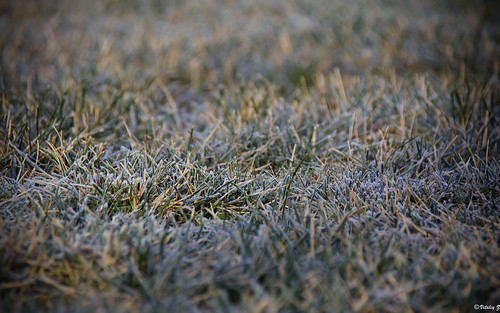 travel winter cold nature grass md nikon frost frostygrass nikond7000