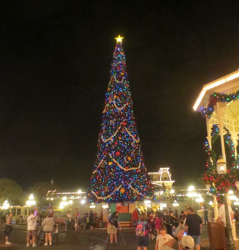 Giant tree at the Magic Kingdom, night