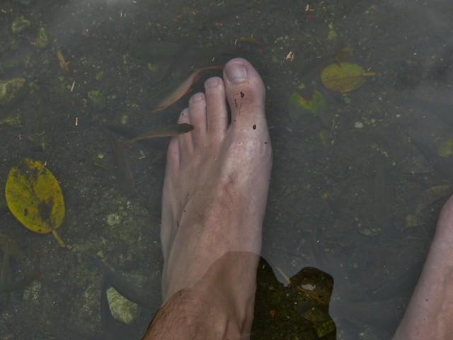 Kaloja cenotessa