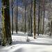 Terre des Vosges