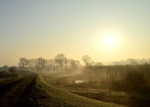 road morning trees nature grass fog rural sunrise gold marsh ghent gent matchpointwinner gentbrugsemeersen mpt345