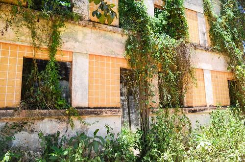 Maisons coloniales régénérées par la nature