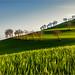 green by Luigi Alesi