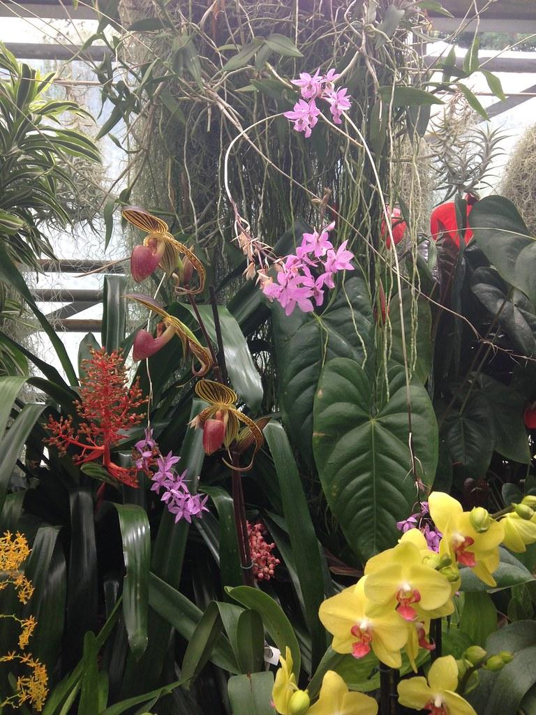 Orchidarium de Prangins 19118848300_e4b21b1d70_b