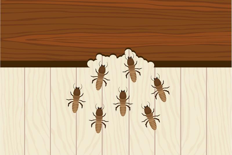 Termite Damage - Termites - House bugs