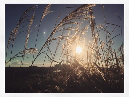 Thanks God is Fridays #tgifridays #sunset #sun